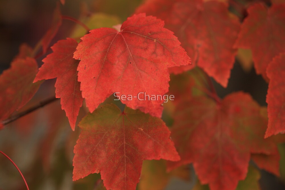The colours of Autumn by Sea-Change