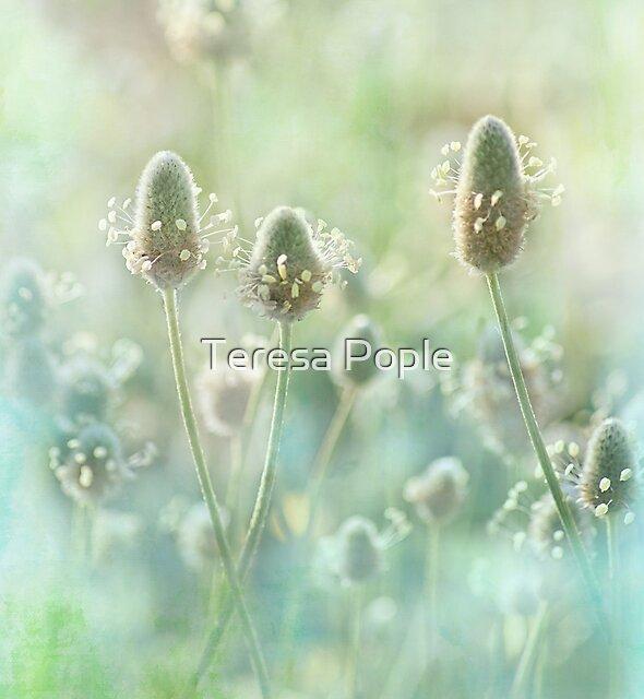 three's a crowd by Teresa Pople