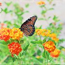 Queen Butterfly on Lantana by Linda Trine