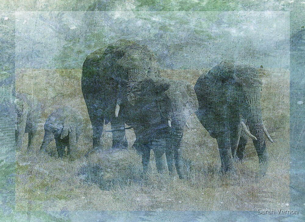 Chalk Elephants by Sarah Vernon