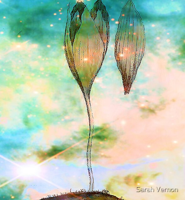 Birth of a Triffid by Sarah Vernon