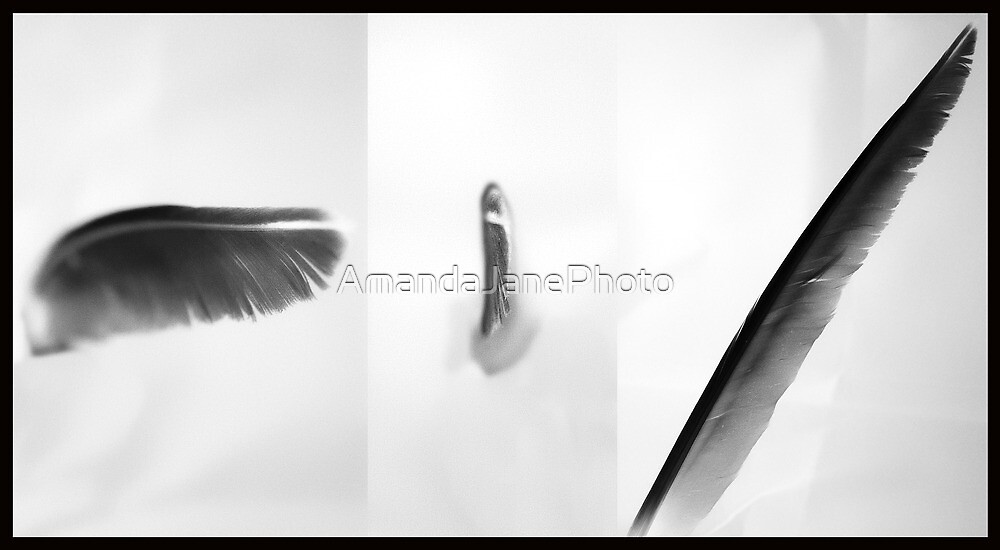 Feather - Tri picture  by AmandaJanePhoto