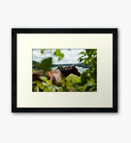 Häst, Fällfors Framed Print
