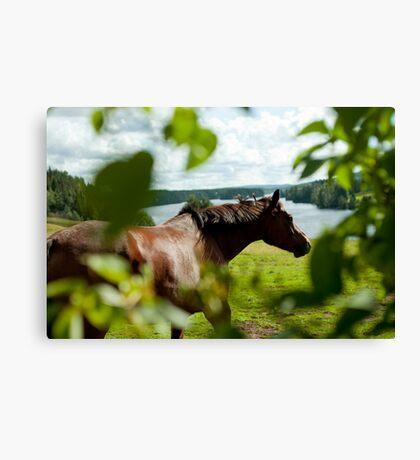 Häst, Fällfors Canvas Print