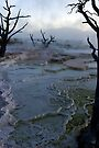 Mystery - Mammoth Hot Springs by Stephen Beattie