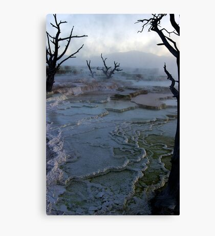 Mystery - Mammoth Hot Springs Canvas Print
