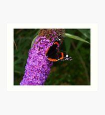 Schmetterling & Schmetterling Baum. Art Print