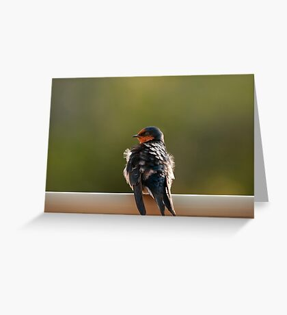 """""""Welcome Swallow"""" Greeting Card"""
