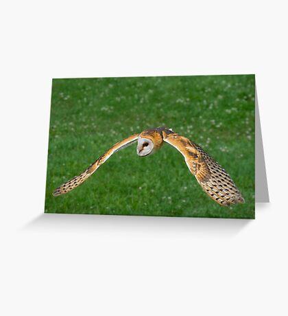 American Barn Owl Greeting Card