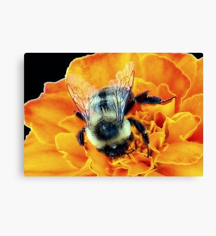 Buzz Off © Canvas Print