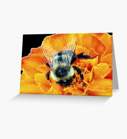 Buzz Off © Greeting Card