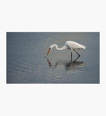 Fisherbird - white egret Photographic Print