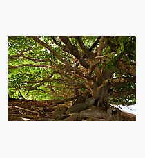 Branches And Roots Photographic Print