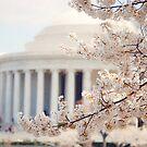 Cherry Blossoms Jefferson Memorial Washington DC by edarlingphoto