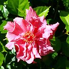 Hibiscus. by CamelotScribe
