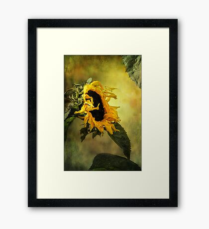 Sunflower, Framed Print