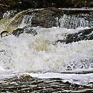 sheen falls salmon by Edward  manley