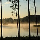 Trees, fog, lake and forest by Antanas