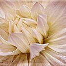 Dahlia Petals by Margi