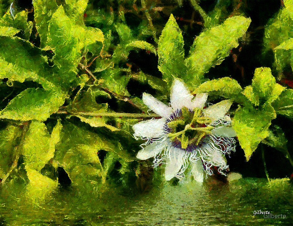 Passion Flower by Gilberte