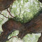 Angel Oak by aDamico