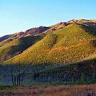 Apgar Mountains (Glacier National Park, Montana, USA) by rocamiadesign