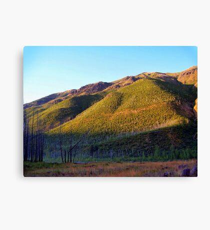 Apgar Mountains (Glacier National Park, Montana, USA) Canvas Print