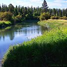 Whitefish River (Whitefish, Montana, USA) by rocamiadesign