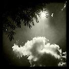 Summer sun through the trees by Richard Flint
