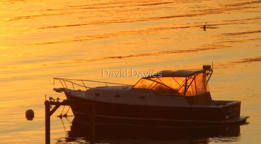 Morning has Broken by David Davies