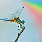 Rainbow Dragonfly by Bonnie T.  Barry