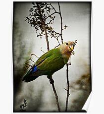 Lovebird Poster