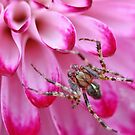 Incy Wincy... by Astrid Ewing Photography