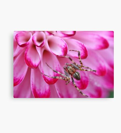 Incy Wincy... Canvas Print