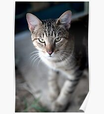 Weezie the Barn Cat Poster
