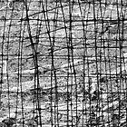 mesh by Bruce Miller