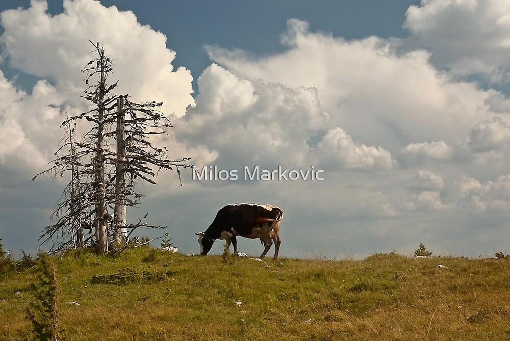 Pasture by Milos Markovic