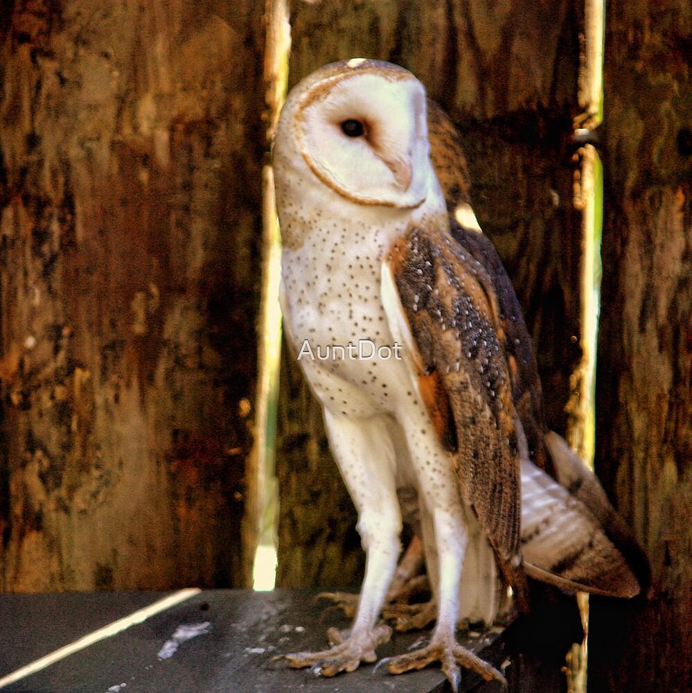 Barn Owl by AuntDot