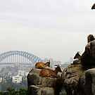 Zoo with a view. by Aussiebluey