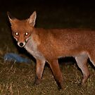 Urban Fox 5 by Dean Messenger