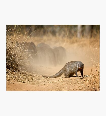 Make Your Escape While I Guard The Rear! Photographic Print
