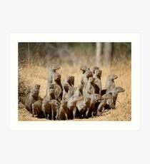A Business of Mongoose Art Print