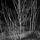 A Winter's Tale by Odille Esmonde-Morgan