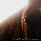 """Intrigued"" A horse close-up. by Rachel McClure"