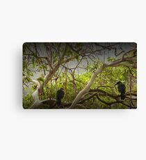 Tasmanian Currawongs Canvas Print