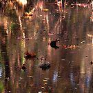 Creek Colors by Jamaboop