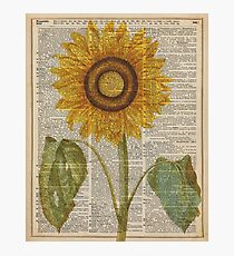 Sunflower over dictionary page,Summer Flower,Vintage Illustration Dictionary Art Photographic Print