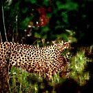 The silent hunter by Alan Mattison