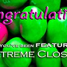 Extreme Close-Ups Feature Banner Entry by Susana Weber