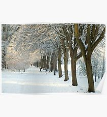 Winter Wonderland in Maynooth, Ireland. Poster